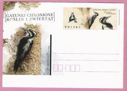 Poland 2018, Postcard MNH, Bird, PICINAE, Oiseaux , Birds - Autres