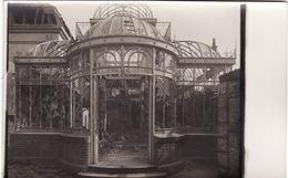 CP Photo 1914-1915 WILLERVAL (près Vimy) - Le Jardin De Palmiers Du Château (A66, Ww1, Wk1) - France