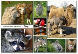 Farma Wenet Broumov (mini Zoo), Czech Rep. - Camel, Rosella, Wallaby, Alpaca, Donkey, Fox, Rhea - Tchéquie