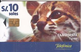 PERU - Puma, Tambopata/Tigrillo, Telefonica Telecard, Chip GEM3.1, Tirage %50000, 11/00, Used - Peru