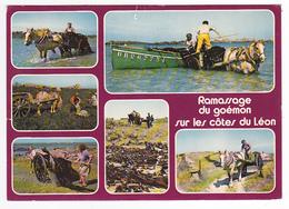 29 Récolte Du Goëmon Sur Les Côtes Du Léon Attelages Chevaux Postée à Plouguerneau En 1981 - Plouguerneau