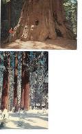 Carte / Lot De 2 Cartes / Arbres SEQUOIA / Amérique / WASHINGTON TREE / CALIFORNIE National Park - Arbres