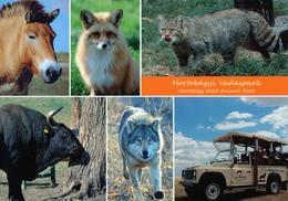 Hortobagy Vadaspark (Wild Animal Park), Hungary - Przewalski's Horse, Fox, Auerochs, Wolf, Wild Cat - Hongrie