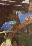 Wilhelma Zoo-Botanischer Garten Stuttgart, Germany - Macaw - Stuttgart