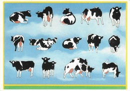 Vaches (2 Scans) - Vaches