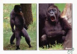 Apenheul Apeldoorn, Netherlands - Wooly Monkey, Gorilla - Apeldoorn