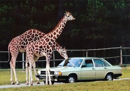 Safari Park Ganserndorf, Austria - Giraffe - Gänserndorf