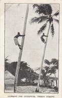 CLIMBING FOR COCOANUTS,TORRES STRAITS - Aborigines
