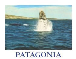 13 Ansichtskarten Mit Motiven: Wal / Walfisch / Delfin (D-A254) - Autres