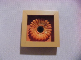 Orange Flower In Wooden Frame - Other Collections