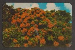 The Royal Poinciana Tree With Blossoms, Bermuda - Unused - Bermuda