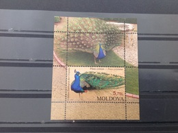 Moldavië / Moldova - Postfris / MNH - Pauw 2013 - Moldavië