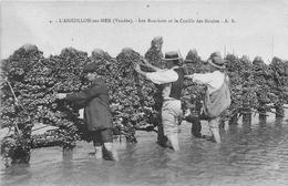 ¤¤  -  L'AIGUILLON-sur-MER   -  Les Bouchots Et La Cueille Des Moules  - Mytiliculteurs - France