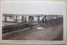 SENEGAL SAINT-LOUIS RECOLTE DU SEL A SALSAL - Senegal