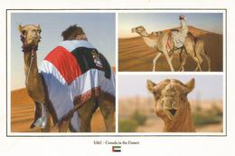 UAE. DUBAI , Camels In The Desert. Carte Postale Neuve Non Circulée - Emirats Arabes Unis