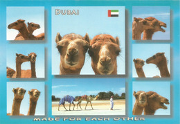 UAE. DUBAI , Camels In The Desert. Carte Postale Neuve Non Circulée - Sonstige