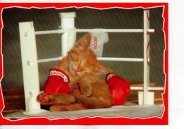 Postcard - Rocky The Cat - Unused Very Good - Postales