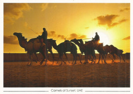 DUBAI. Camels At Sunset UAE.  Carte Postale Neuve Non Circulée - Emirats Arabes Unis