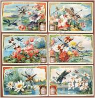 Figurine Liebig - Italia - Sang. 896 - Fiori E Libellule - 1907 - Liebig