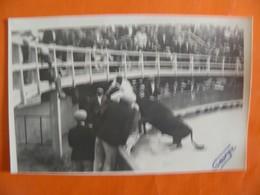 CAMARGUE - Cartes Postales Noir Et Blanc - Photo George - Razet Dans Les Arènes - France