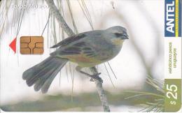 URUGUAY - Bird, Tordo Musico(378a), 02/05, Used - Uruguay