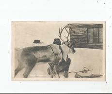 NORGE . RENENRIGGES TIL 1927 - Norwegen