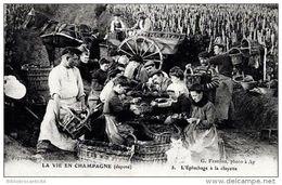 Cpa  D51 - LA VIE EN CHAMPAGNE < L'EPLUCHAGE A LA CLAYETTE - Cultures