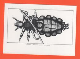 PL/8 Diderot Et D'Alembert Encyclopédie Le Pou - Marcel Desbled Belbeuf 76240 Le Mesnil Esnard Le Pou Vu Au Microscope - Animaux & Faune