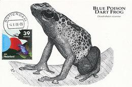 D34152 CARTE MAXIMUM CARD RR FD 2006 NETHERLANDS - BLUE POISON DART FROG CP ORIGINAL - Frogs