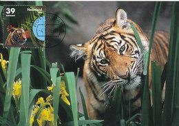 D34153 CARTE MAXIMUM CARD FD 2006 NETHERLANDS - TIGER ROTTERDAM ZOO BLIJDORP CP ORIGINAL - Big Cats (cats Of Prey)