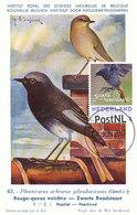 D34177 CARTE MAXIMUM CARD 2017 NETHERLANDS - PHOENICURUS ZWARTE ROODSTAART CP MUSEUM 43 ORIGINAL - Zangvogels