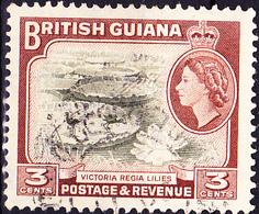 Britisch-Guayana - Riesenseerose (Victoria Amazonica), Lappenjacana (Jacana Spinosa Jac (MiNr: 201) 1954 - Gest Used Obl - Guayana Británica (...-1966)
