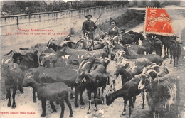 ¤¤   -   Types Méridionaux  -    Troupeau De Chèvres Et Le Chevrier    -   ¤¤ - Farmers