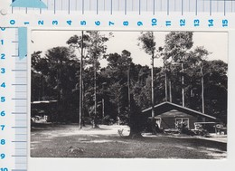 Natuurpark Brownsberg - Mazaroni Plateau Met Logeergebouw - Surinam