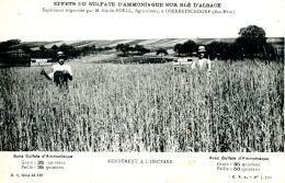 N°62552 -cpa Effets Du Sulfate D'ammoniaque Sur Blé D'Alsace-Oberbetschdorf- - Cultures
