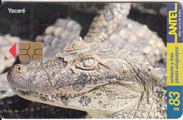 URUGUAY - Crocodile, Yacare(86a), 09/99, Used - Uruguay