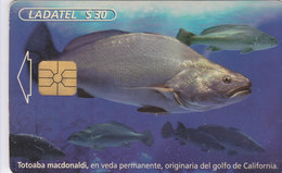 Mexico Phonecard LADATEL TELMEX TOTOABA MACDONALDI Fish From The Gulf Of California No Credit Good Condition - Mexico