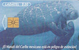 Mexico Phonecard LADATEL TELMEX 2 Cards MANATI And Baby From The Mexican Caribe  No Credit Good Condition - Mexico