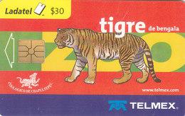 Mexico Phonecard LADATEL TELMEX BENGAL TIGER  No Credit Good Condition - Mexico