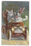SCHROPLER ILLUSTRATEUR CHATS DANS UN TACOT 1911 CPA 2 SCANS - Illustrateurs & Photographes