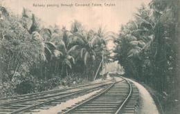 SRI LANKA RAILWAY PASSING THROUGH COCOANUT ESTATE CEYLON PAS CIRCULEE - Sri Lanka (Ceylon)