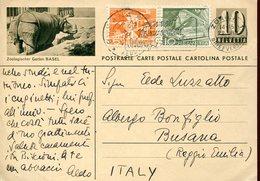34380 Switzerland,stationery Card Circuled To Italy 1953 Shwing A Rhino, Zoo Of Basel,Nashorn,rhinoceros - Rhinozerosse