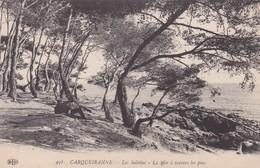 83 / CARQUEIRANNE / LES SALETTES / LA MER A TRAVERS LES PINS - Carqueiranne