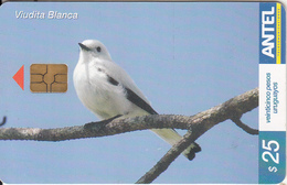 URUGUAY - Bird, Viudita Blanca(379a ), 02/05, Used - Uruguay