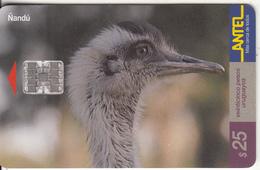 URUGUAY - Bird, Nandu(104a), 03/00, Used - Uruguay