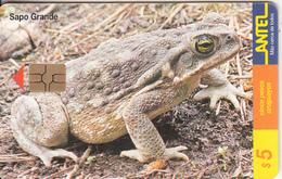 URUGUAY - Frog, Sapo Grande(102a), 02/00, Used - Uruguay