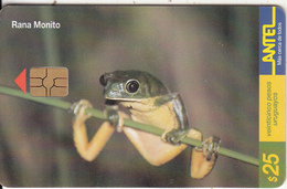 URUGUAY - Frog, Rana Monito(96a), 02/00, Used - Uruguay