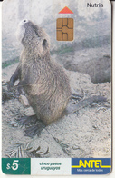 URUGUAY - Animal, Nutria(93a), 12/99, Used - Uruguay