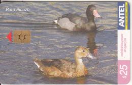 URUGUAY - Bird, Pato Picazo(416a), 11/05, Used - Birds