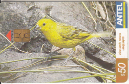 URUGUAY - Bird, Dorado(380a), 03/05, Used - Birds